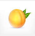 ripe apricot with green leaves vector image vector image