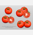 tomatoes isolated realistic detailed 3d vector image vector image