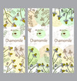 herbal tea collection chamomile vector image