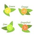 Citrus fruits orange lime grapefruit and lemon vector image