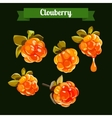 colorful branch of Clowdberry vector image vector image