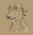 monochrome german pinscher hand drawing portrait vector image vector image