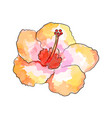 the watercolor of exotic vector image vector image