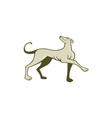 Greyhound Dog Marching Looking Up Cartoon vector image vector image