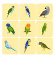 set of colorful parrot icons vector image vector image