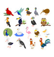 big set of different cartoon birds vector image vector image