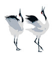 mating dance of cranes vector image vector image