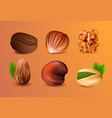 collection of realistic nuts vector image