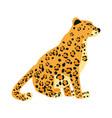 leopard cute trend style animal predator mammal vector image