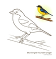 Blue winged mountain tanager color book vector image vector image
