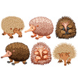 Brown and pink echidnas on white vector image