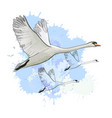 drawing flying flock swans with vector image vector image