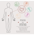 Food for intestines vector image vector image