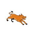 Angry Pig Jumping Attacking Cartoon vector image vector image