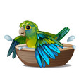 green parrot bathing in a bowl of water isolated vector image vector image