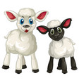 two little lambs on white background vector image vector image