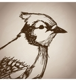 bird portrait forest hand drawing vintage vector image