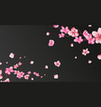 sakura blossom falling petals isolated flower vector image vector image