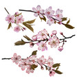 sakura flowers background vector image vector image