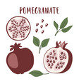 set of whole pomegranate fruit segment vector image vector image