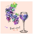 sketch grapes wine of for design vector image vector image
