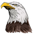 bald eagle on white vector image