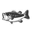 bass fish icons isolated on white background vector image vector image