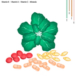 Green Collard with Vitamin K A and C vector image vector image