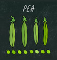 black board green pea pod healthy bio vegetarian vector image vector image