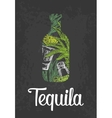 Bottle of tequila with glass cactus salt and vector image vector image
