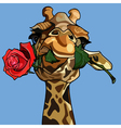 giraffe holding a rose in its mouth vector image vector image