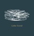 lobe coral drawing of sea vector image vector image