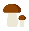Mushrooms cartoon on white vector image vector image