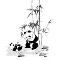 panda and baby eat a bamboo vector image