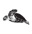 graphic sea turtle vector image vector image