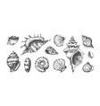 hand drawn tropical marine seashells black and vector image