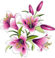 bouquet of pink lily flowers vector image