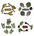 color vegetables set vector image