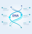 dna infographics spiral human biology structure vector image vector image