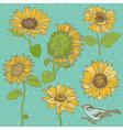 Flower Set Detailed Hand Drawn Sunflowers