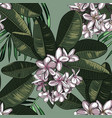 seamless pattern with plumeria flowers and vector image vector image