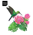 summer tropical design with hummingbird flowers vector image vector image