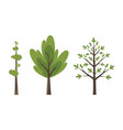 decorative trees icon set flat trees in a flat vector image vector image