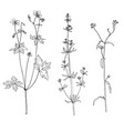 set ink drawing herbs and flowers vector image vector image
