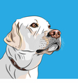 white dog breed labrador retriever vector image vector image
