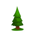 green coniferous tree vector image