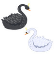 black and white swans isolated on a white vector image