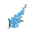 forget me not floral vector image