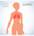 location of the lungs in the female body the vector image