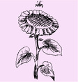 sunflower bee vector image vector image